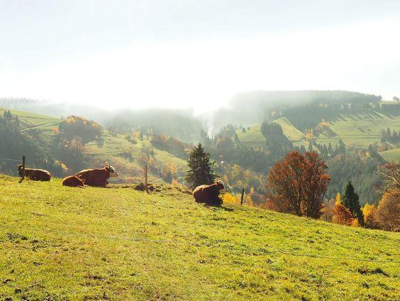 Pastorale land  Landscapes photo by MacBen http://rarme.com/?F9gZi