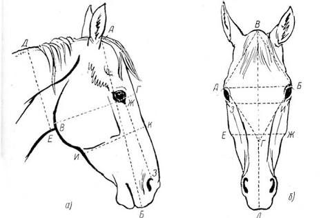 draw human proportions pdf free