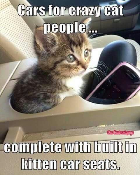 Kitten car kit