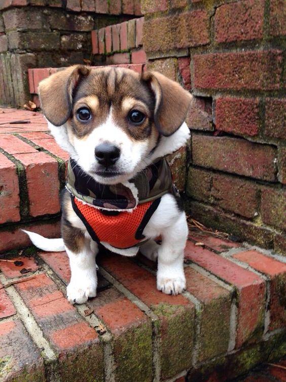Whatta cutie!