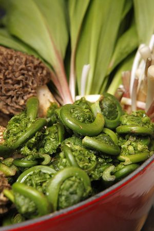 Fiddle heads, Ramps and Morels | Foodie ♥ | Pinterest