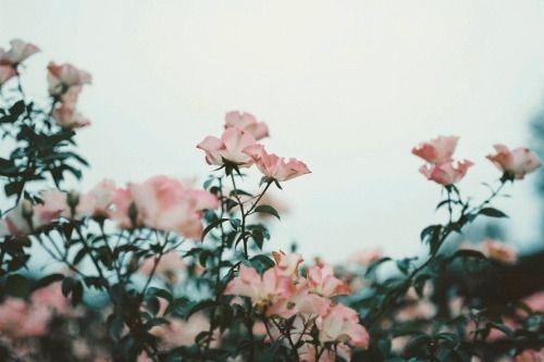 Flourish Flower Header Aesthetic Desktop Wallpaper Twitter Header Pink