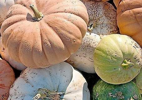 The Trentonian - The Dish: Talking pumpkin with Chef Chris Albrecht