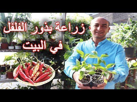 طريقة بسيطة لزراعة بذور الفلفل بالبيت زراعة الفلفل Planting Pepper Seeds Youtube In 2021