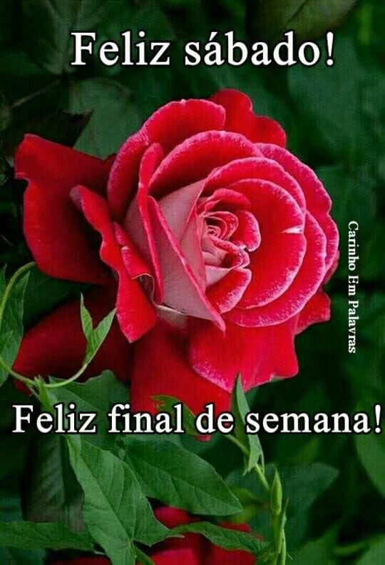 Pin By Ileana Correa Robles On Sabado Happy Day Feliz Rose