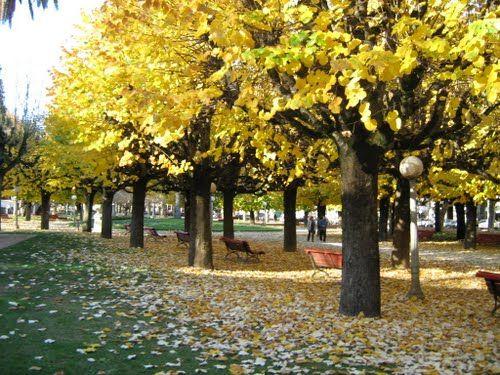 Coimbra -  Parque Verde Outono