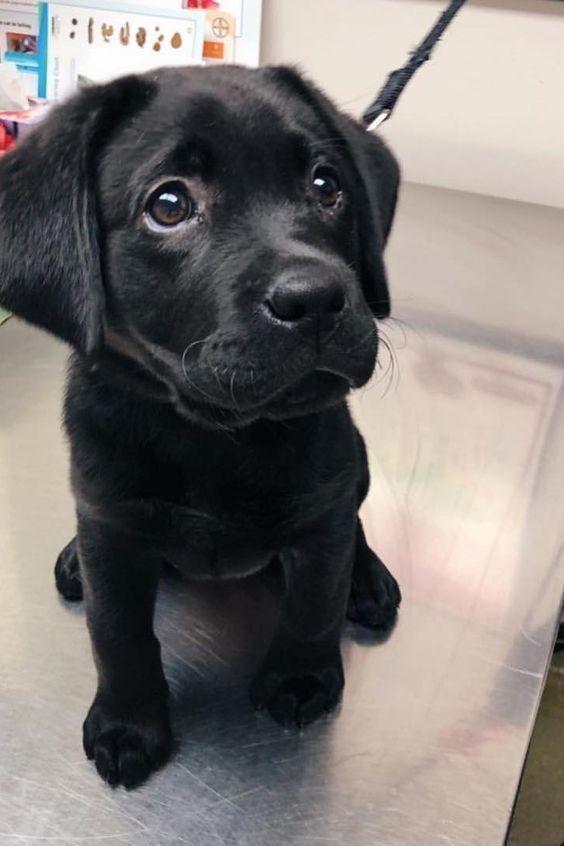 For Licensing Requests Data Elkevogelsan Facebook Schattigste Dieren Honden Schattige Dieren
