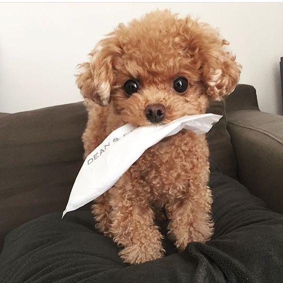 ぬいぐるみのようなかわいい子犬