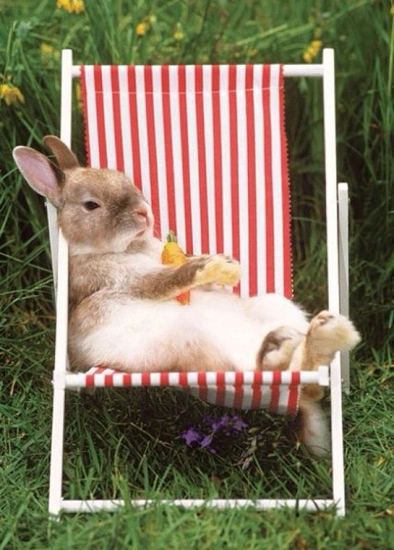 A Little Rest And Relaxation For Rabbit | Cutest Paw