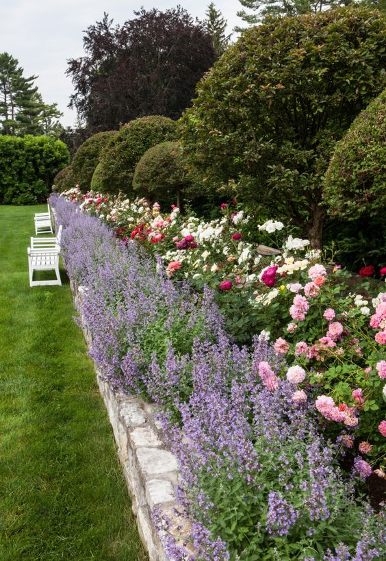 Lavender and rose garden for the back patio wonder if the for White house rose garden design