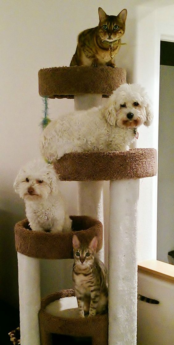 Furry family tree