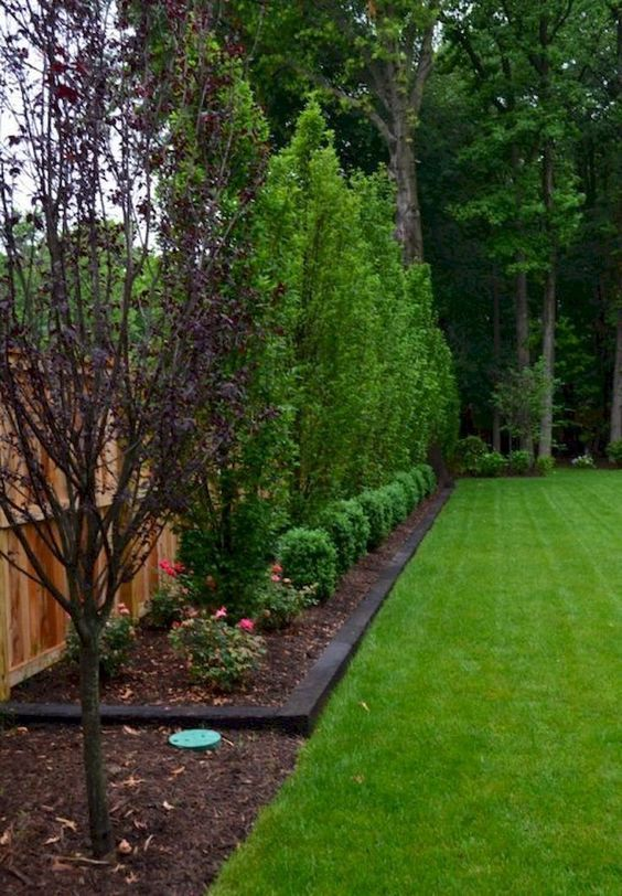 15 Gorgeous Living Fences For Your Yard Large Backyard
