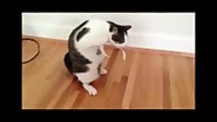 """Vidéo Gag - Compile """"Drôles de Chats""""... -"""