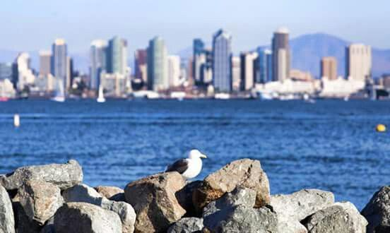 San Diego Skyline across the Bay in San Diego, California