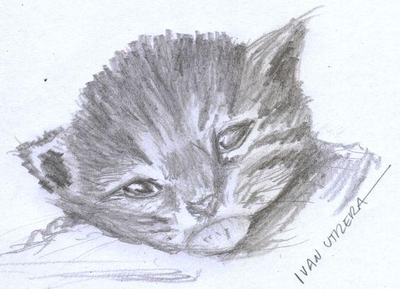 gatito a lápiz
