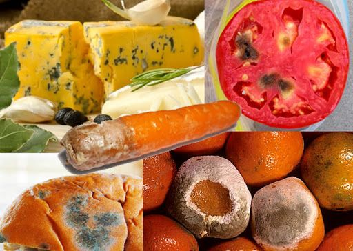 Makanan Berjamur Apa Masih Bisa Dimakan Karena Penyimpanan Dalam Suhu Yang Tidak Tepat Banyak Makanan Langsung Dibuang Disebabkan T Makanan Jamur Kesehatan