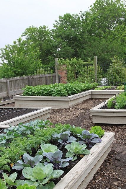 Kitchen gardens raised beds gardens pinterest for Kitchen garden design