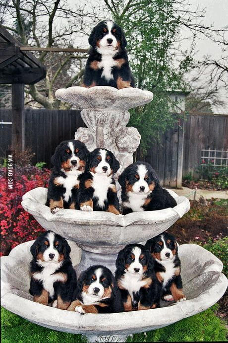 The fountain of youth. - 9GAG
