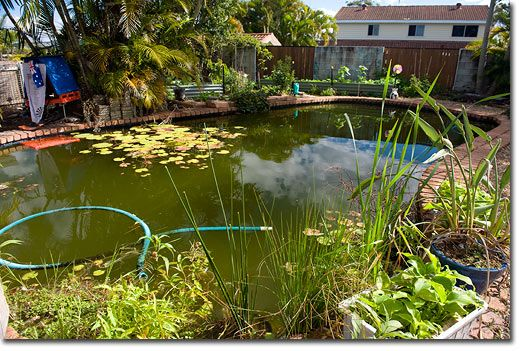 Swimming pools permaculture and swimming on pinterest for Koi pond pool