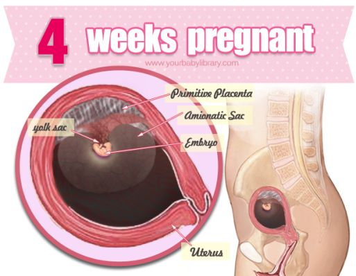 Hopefully, while 4 weeks pregnant, you are in the know. It ...