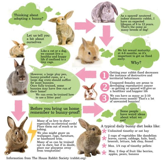 Bunny Trivia 9 Amazing Facts About Pet Rabbits: House, Facts And House Rabbit On Pinterest