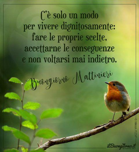 Immagine Del Buongiorno Mattinieri Con Pettirosso E Frase Sulle