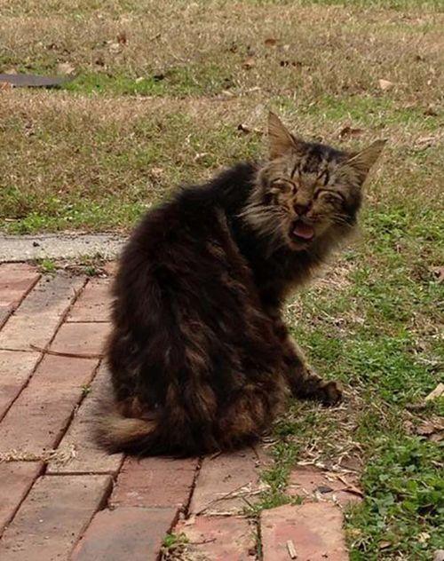 Sneezing cats