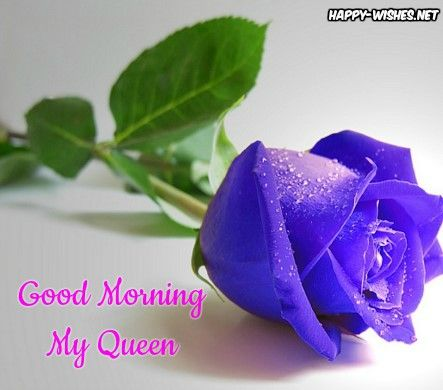 Good Morning My Queen With Blue Rose Images Beautiful Flowers Wallpapers Rose Seeds Green Rose Flower wallpaper good morning