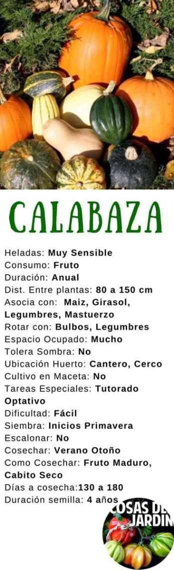 Guía De Cultivo De Calabaza Y Zapallo Cosas Del Jardin Cultivo De Calabaza Como Cultivar Calabazas Huerta En Macetas