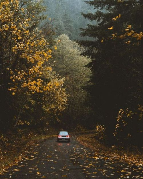Love the mood of this photograph #Autumn #Fall #FallLeaves #FallColor #Nature