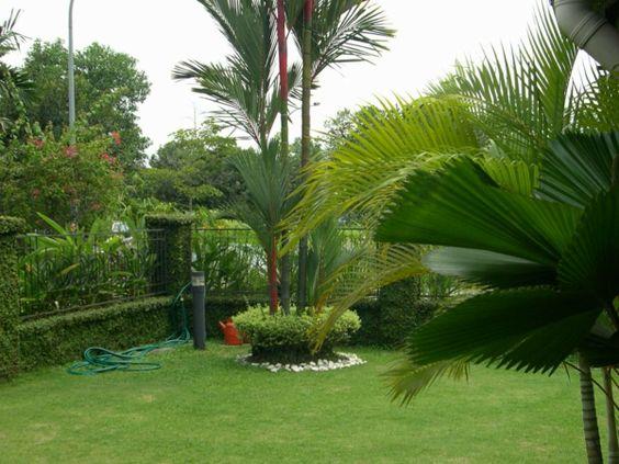 palmen im hinterhof - grüne exotisch epflanzen - Gartengestaltung: 60 fantastische Garten Ideen