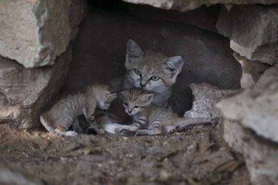 Espécie é listada como 'quase em estinção' por IUCN  (Foto: Reuters/Baz Ratner)