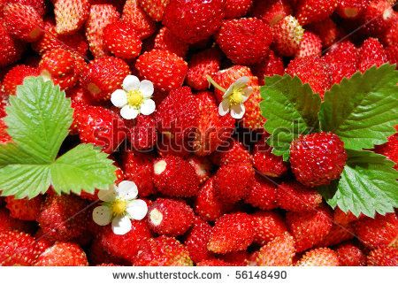 stock photo : A lot of red juicy wild strawberry