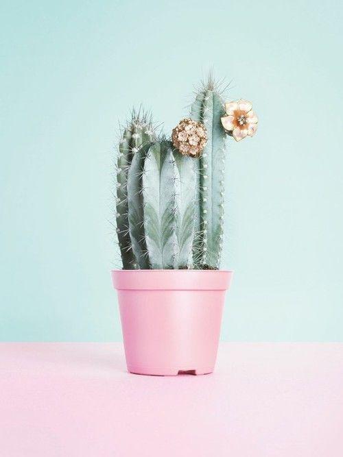 pink aqua: