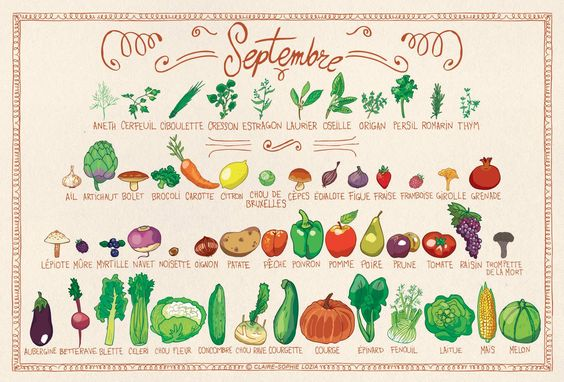 calendrier de fruits et légumes de saison du mois de septembre, Boîte de graines