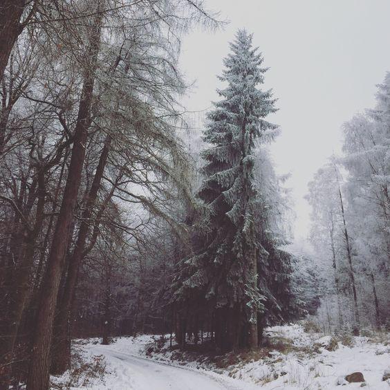 Mist Snow Winter Nature Forest Winter Landscape Photography Winter Landscape Nature Photography
