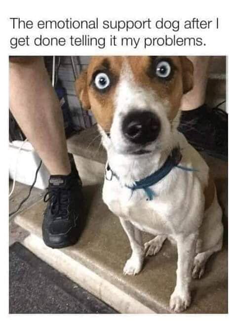42 Randoms Chock Full Of Vitamins And Minerals Funny Dog Memes Emotional Support Dog Dark Humor Jokes