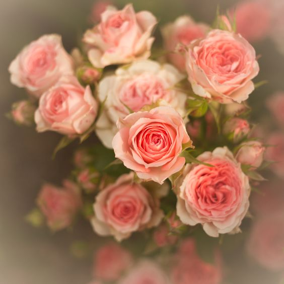 Roses from Leahs garden photo