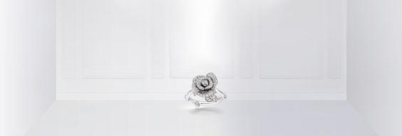 Rose Dior Bagatelle Love++++