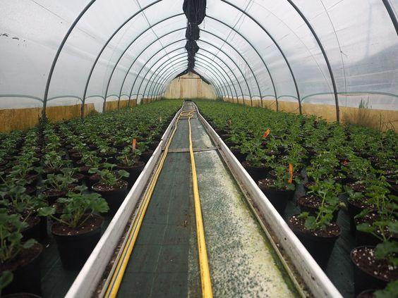 Le nostre serre di produzione traboccano di giovani piante, alcune sono già pronte altre stanno crescendo per ornare i vostri balconi e giardini. Passa al garden a vedere le novità per la stagione 2016