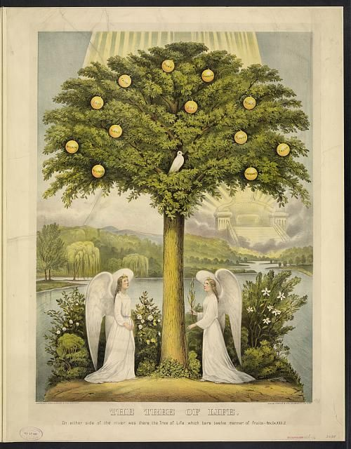 The tree of life: on either side of the river was there the tree of life which bare twelve manner of fruits.--Rev. ch. XXII,2