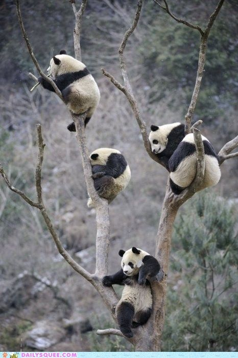 Oh. My. God. Panda Tree.