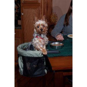 Amazon.com: Pet Gear Dog High Chair (Sage): Pet Supplies