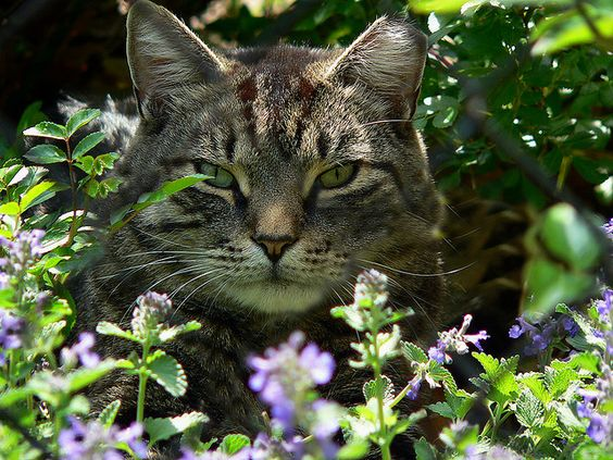 #War Cat in The Flowers  Like,Repin,Share, Thanks!