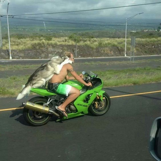 Taking his dog out for a ride