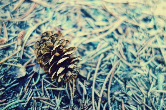 Pinecone in the Banff Woods Art Print by LydiaWhiteElk | Society6
