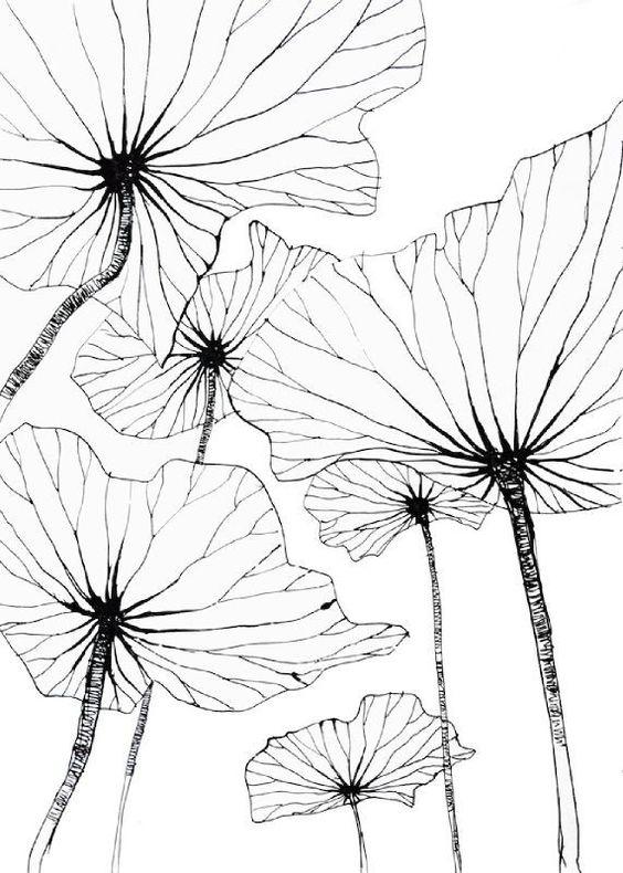 Feuilles de lotus par Stephanie Ledoux