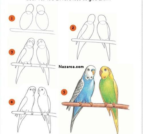 Kolay Papagan Resmi Nasil Cizilir Drawing Lessons Cizim