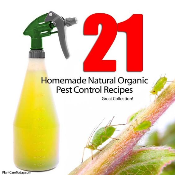 Easy Homemade Organic Pesticides