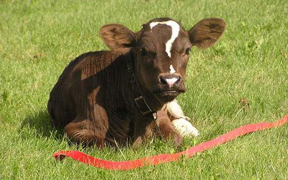 25 Animales Famosos Por Tener Marcas En La Piel Tan Inusuales Como Esta